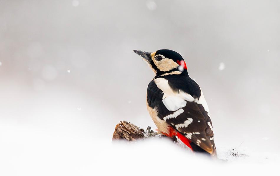 Téli madárvédelem