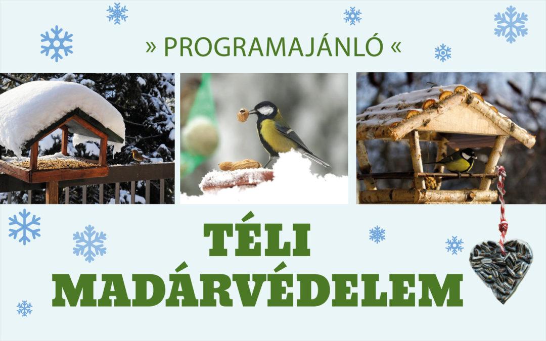 Téli madárvédelem – január 19.