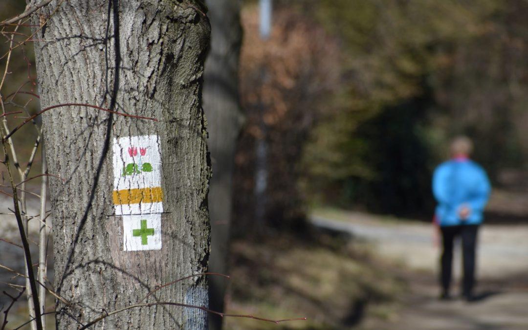 A biztonságos erdőlátogatás fontossága