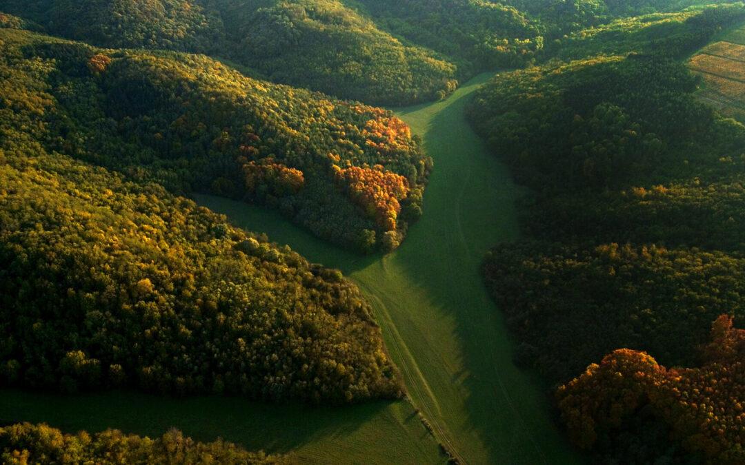 Mi fán terem az erdő? – társadalmi célú kampány