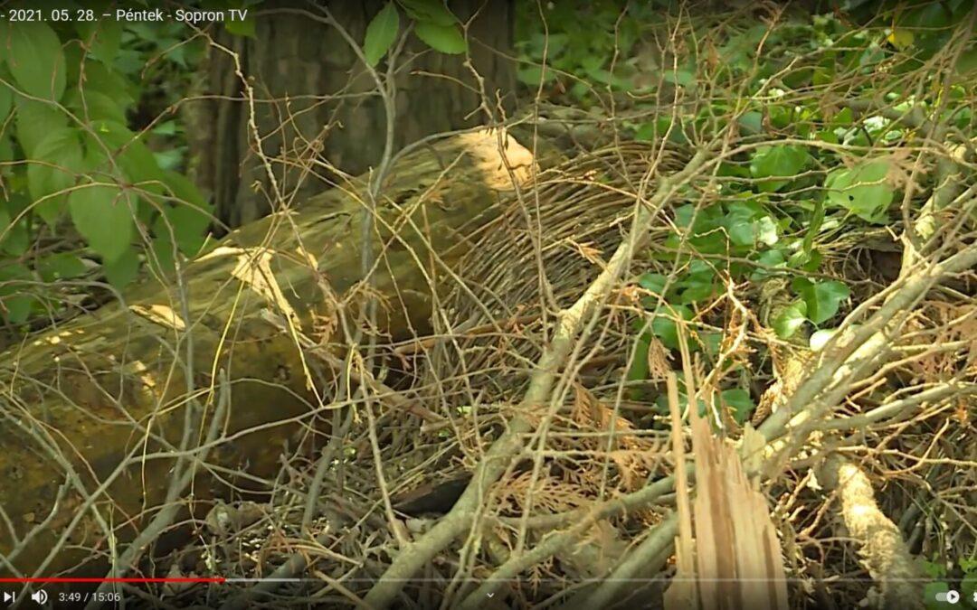 Illegális hulladéklerakás – zöldhulladék